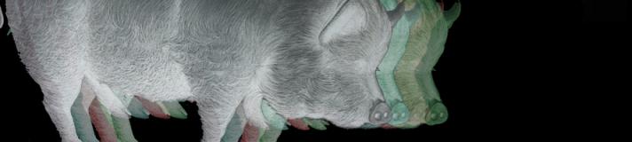 Pig Banner RA