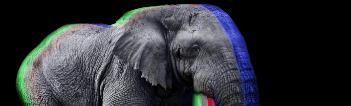 RA Elephant Banner